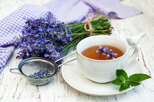 Польза и вред чая из лаванды