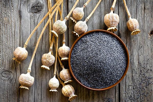 Польза и вред семян мака