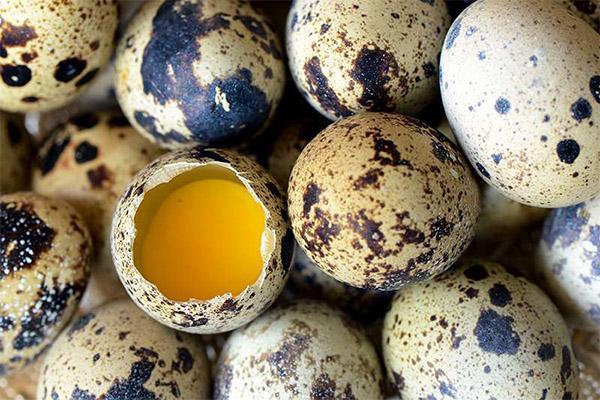 Проверка на свежесть перепелиных яиц