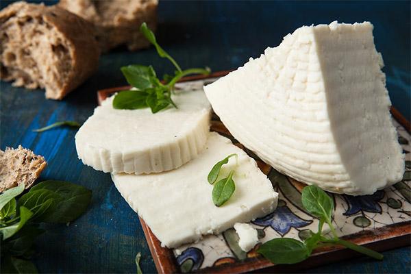 С чем едят адыгейский сыр