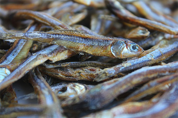 Сушеная и вяленая рыба в медицине