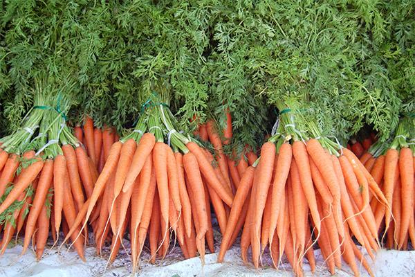 Интересные факты о морковке