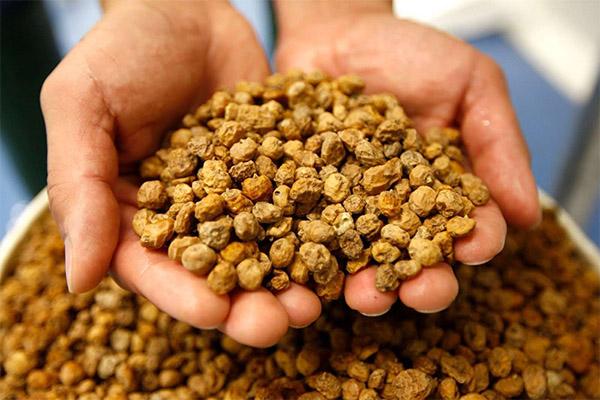 Как выбрать и хранить орех чуфа