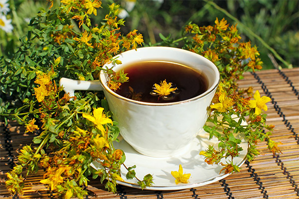Как заварить чай из зверобоя