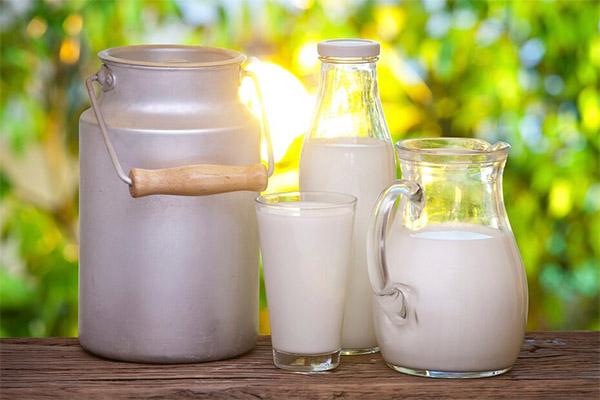 Козье молоко в медицине