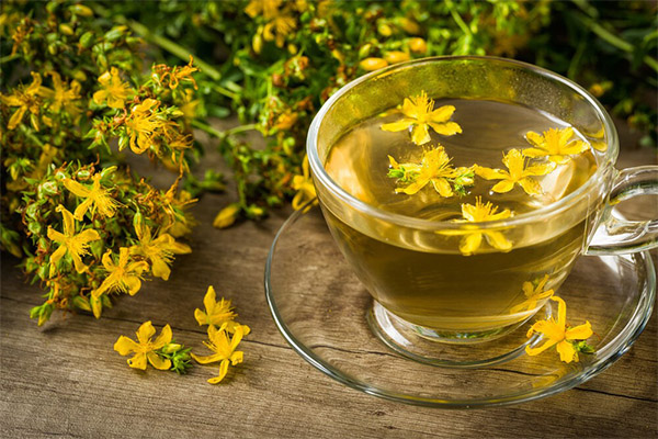 Полезные свойства чая из зверобоя