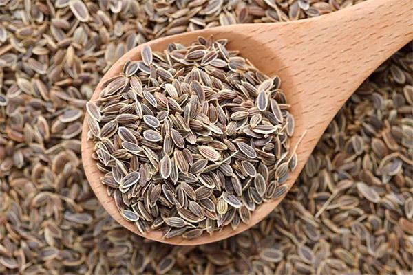 Польза и вред семян укропа