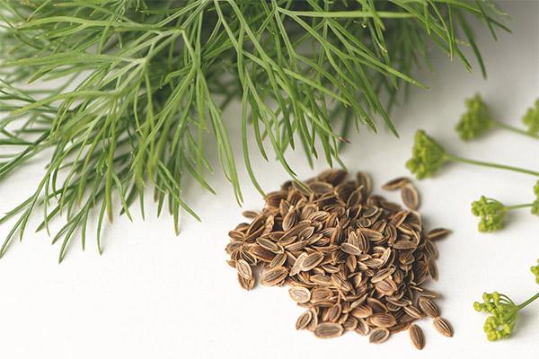 Рецепты народной медицины на основе семян укропа
