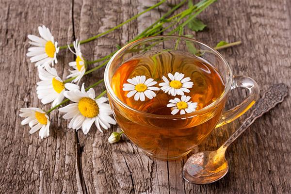Ромашковый чай в медицине