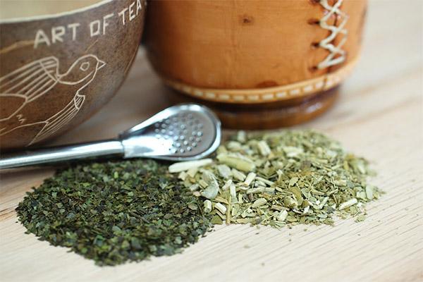 Вред и противопоказания чая мате