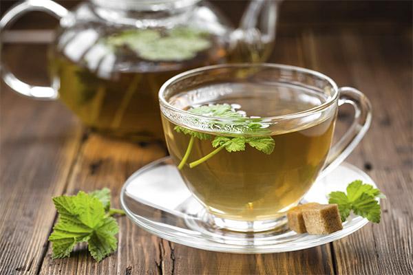Чай из листьев смородины в медицине