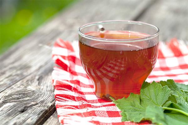 Чем полезен чай из листьев смородины