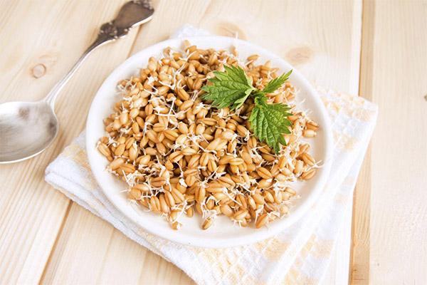 Что можно приготовить из пророщенной пшеницы