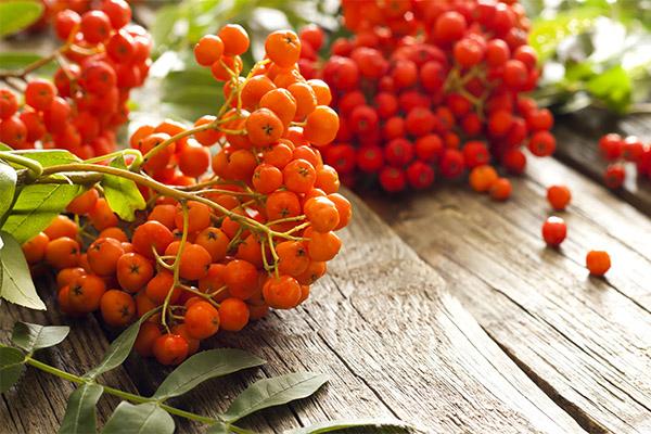 ягоды годжи вред биосфере наносит