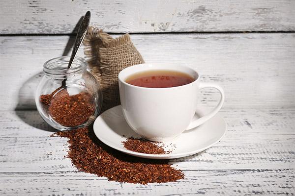 Польза и вред чая ройбуш