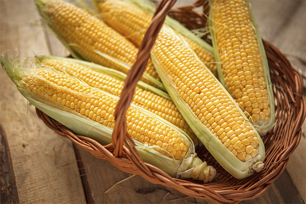 Как выбрать и хранить кукурузу