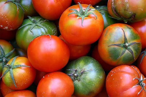 Как выбрать и хранить помидоры