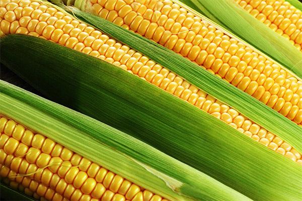 Кукуруза в косметологии