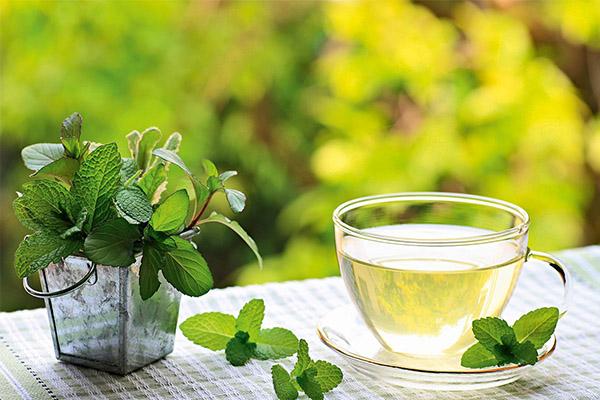 Мятный чай в медицине