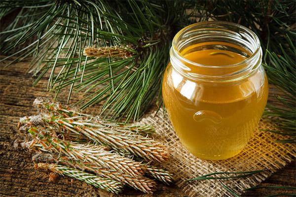 Польза и вред лесного меда