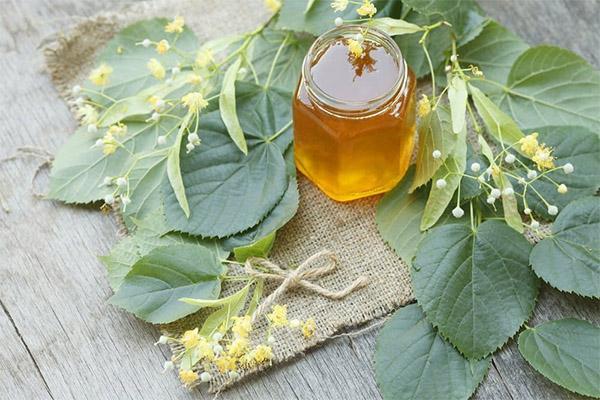 Рецепты народной медицины с липовым медом