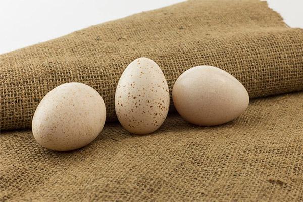 Чем полезны индюшиные яйца