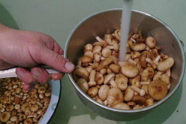 Как правильно чистить грибы опята