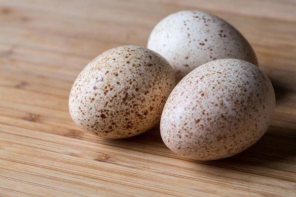 Применение индюшиных яиц в косметологии