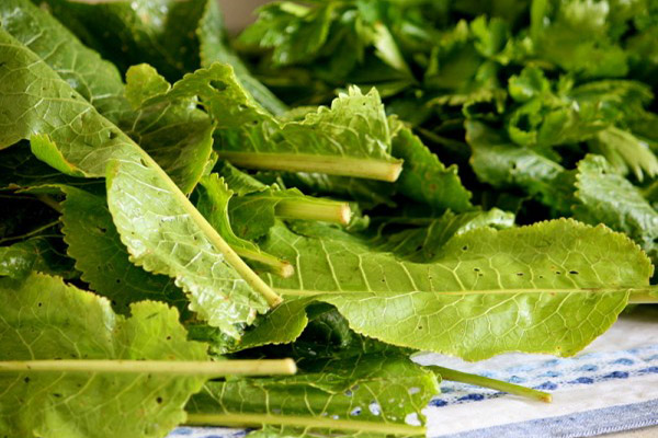 Применение листьев хрена в кулинарии