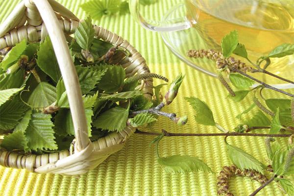 Березовые листья в народной медицине