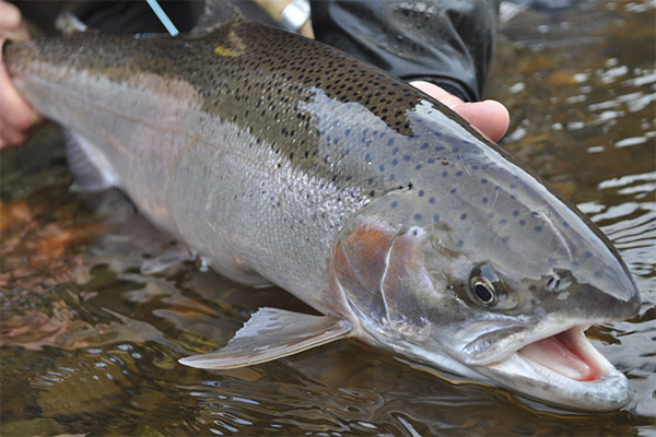 Интересные факты о лососе