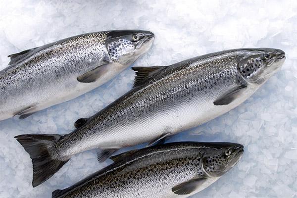 Как выбрать и хранить лосося