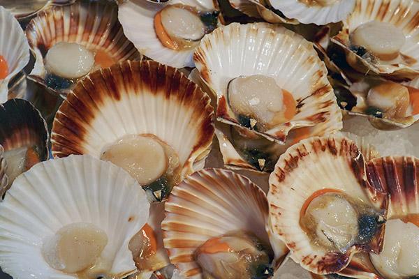 Как выбрать и хранить морских гребешков