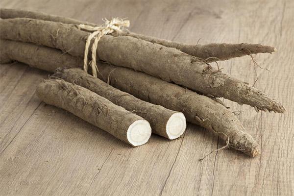 Лечебные свойства корня лопуха