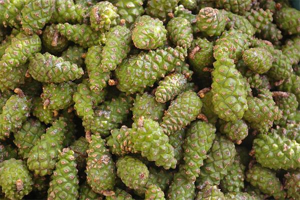Лечебные свойства сосновых шишек
