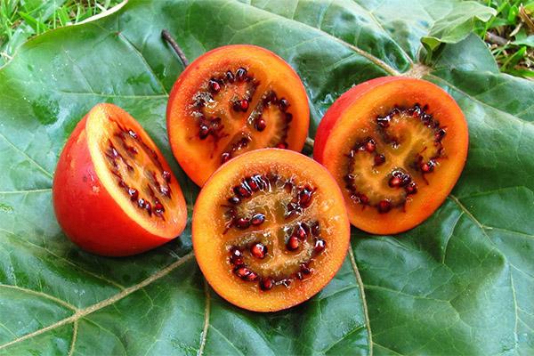 Полезные свойства фрукта тамарилло