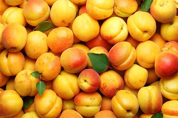 Интересные факты об абрикосах