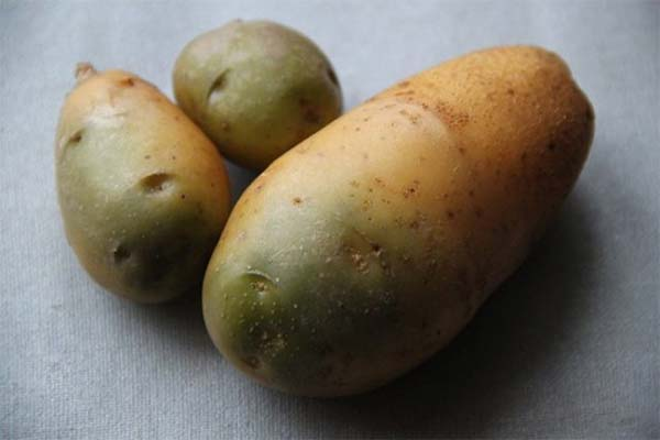 Можно ли курам давать зеленую картошку