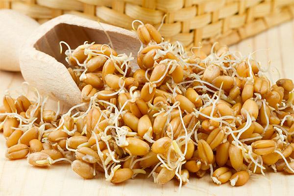 Как похудеть, употребляя в пищу ростки пшеницы